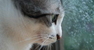 "APEL BEOGRADSKIM ŠKOLAMA: Prijavite svoje đake za predavanje službe ""Animal Rescue Serbia"""